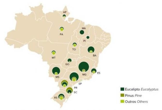 ÁREAS DE ARVORES PLANTADAS NO BRASIL POR ESTADO E POR GENERO (IBÁ 2019)